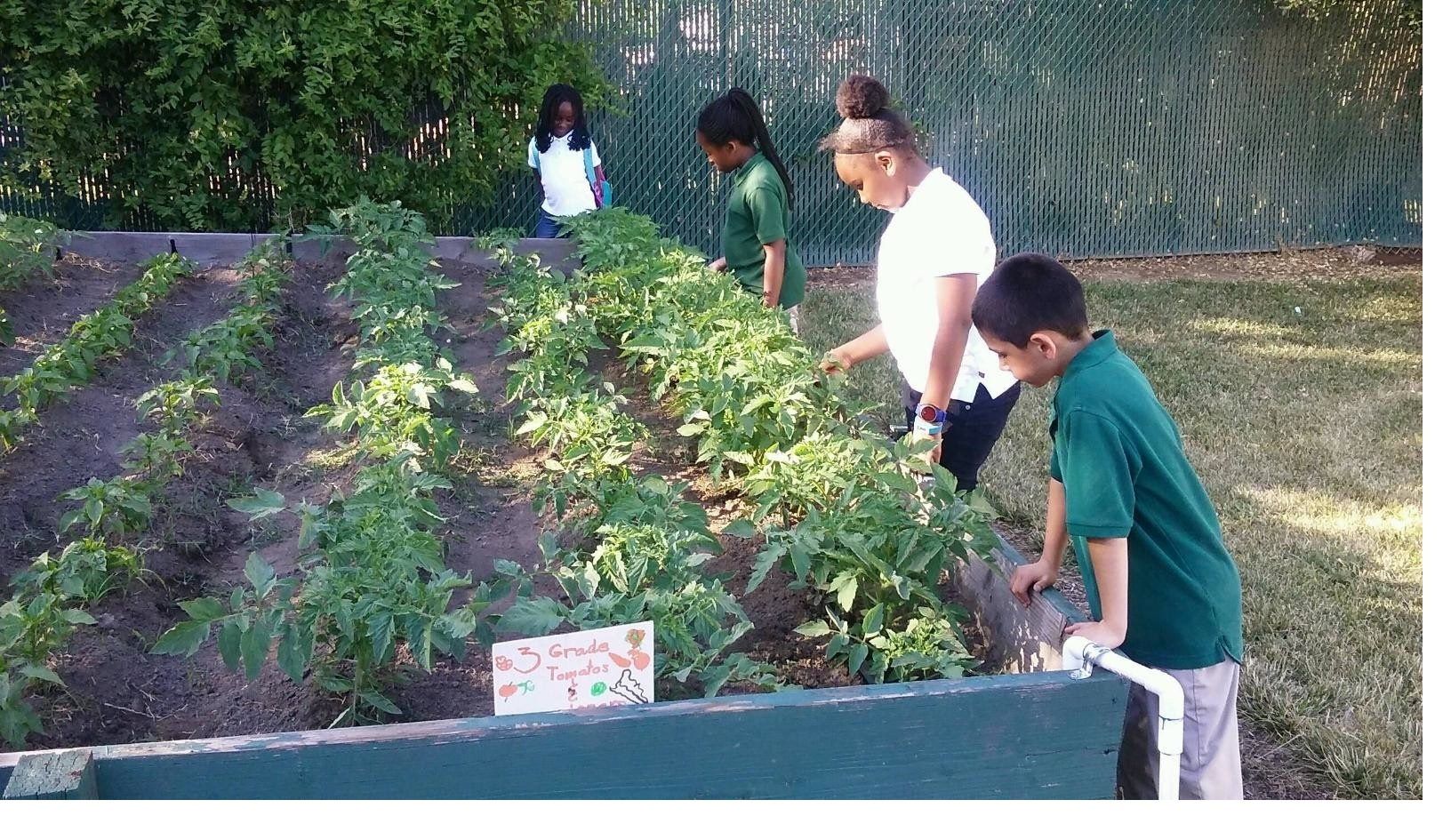 HLA Inspire Garden program supports sustainable gardening